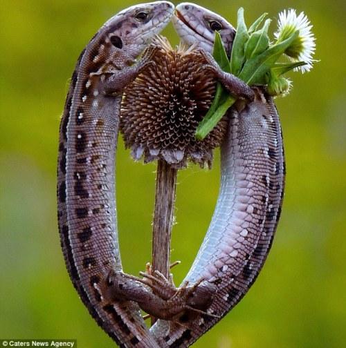 动物也浪漫(图) - 紫涵带刺的玫瑰 - 紫涵带刺的玫瑰