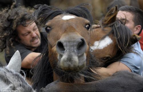 男子抱著野馬的脖子。