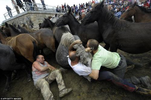 男子將一匹野馬按倒在地。