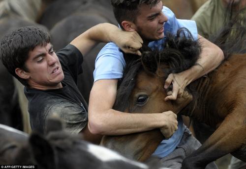 男子與野馬展開力量的較量。
