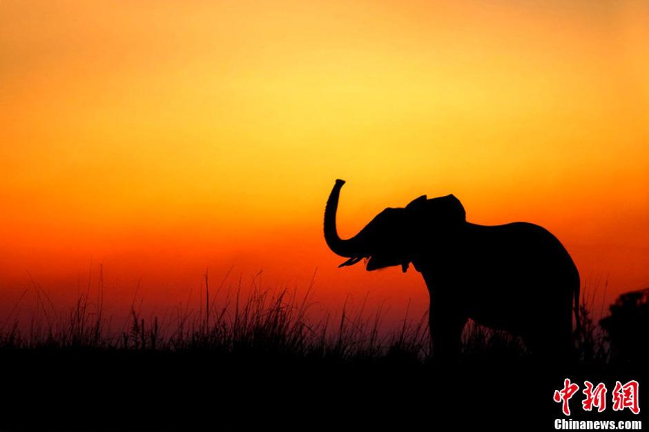 高清:日落时分非洲草原动物唯美剪影