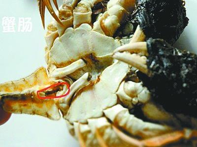 螃蟹四个部位不能吃:蟹胃