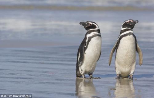 资料图:企鹅