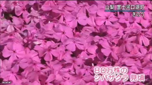 粉色动漫风景华丽图片