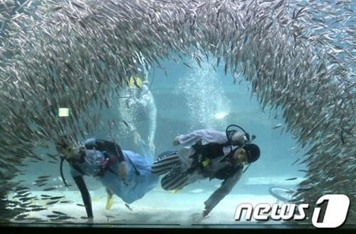 韩国首尔水族馆2万条沙丁鱼与潜水员共舞(图)
