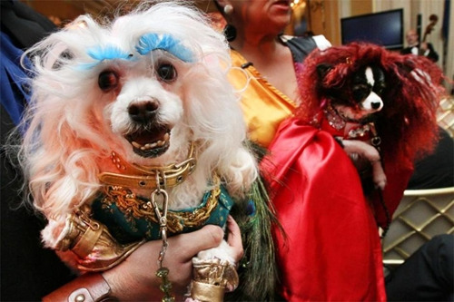 """图为客报酬狗狗办的""""婚礼""""。"""