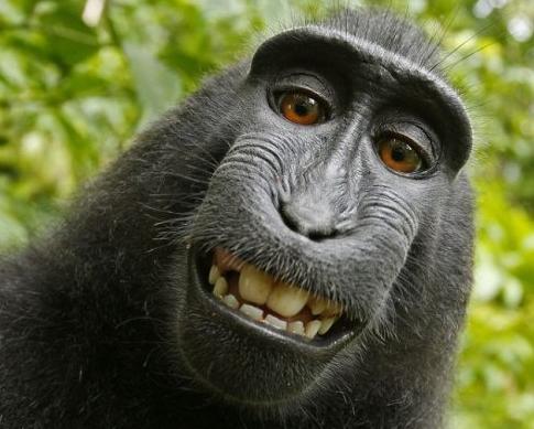 动物微笑的图片唯美