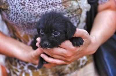 公益人士安排的买狗团前来采办狗。