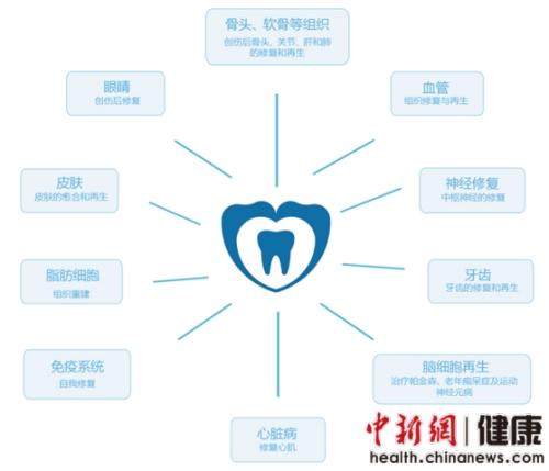 口腔干细胞医用价值