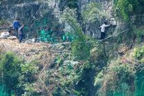 村民爬悬崖刷绿漆
