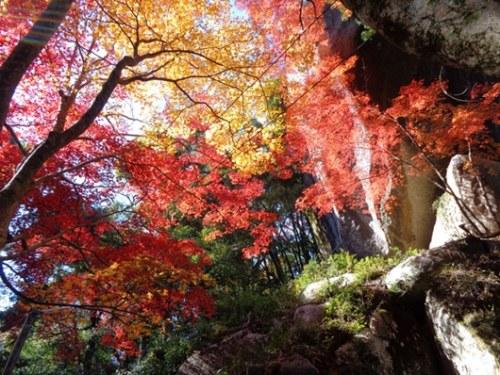 春看樱花,秋赏红叶。