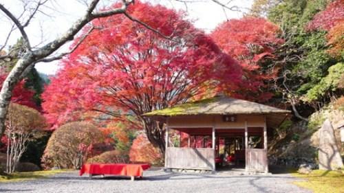 古时的日本人就很喜欢在山间、峡谷等处欣赏红叶美景