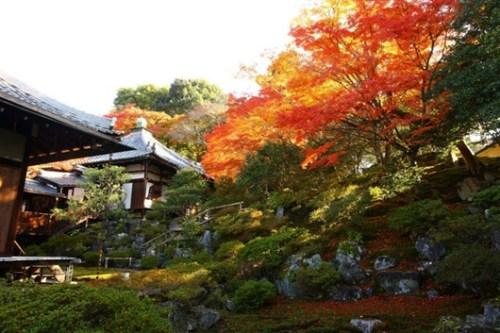 红叶美景。