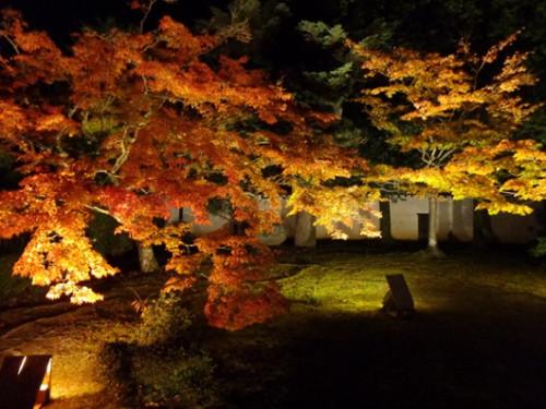 """构成了一幅绝美的""""秋之画卷"""""""