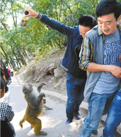 山公争夺旅客手中的饮料。