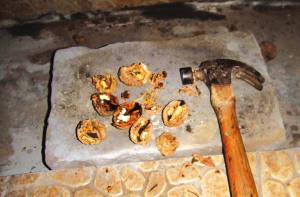 这些核桃十分坚硬,用铁锤使劲砸十几下才能打开,而且核桃仁较少