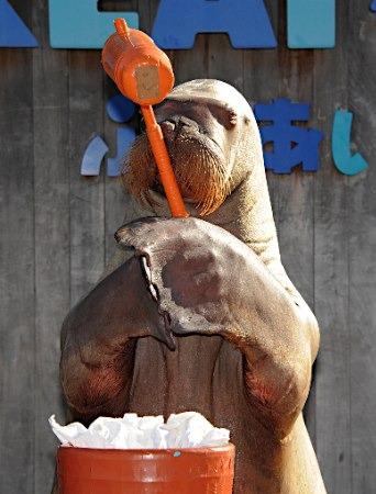 日本动物贺新年:海象打年糕 海狮挥毫祈福(图)