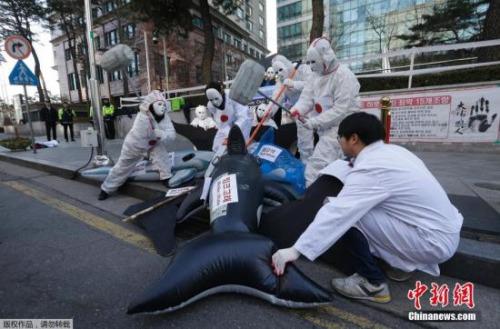 美澳科学家联名发表声明 反对日本重启科研捕鲸
