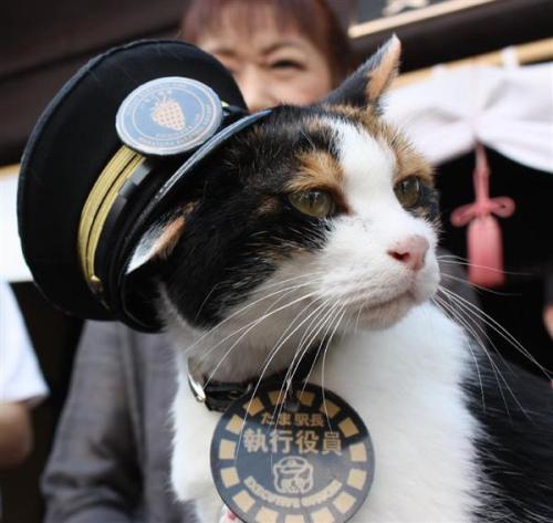 """日本和歌山新设表彰""""殿堂"""" 猫站长阿玉成No.1"""