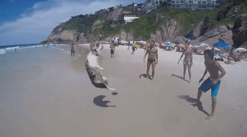 """巴西狗狗沙滩秀惊人球技 被称""""犬界球星内马尔"""""""