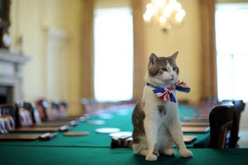 """英首相官邸中养的猫""""拉里"""""""