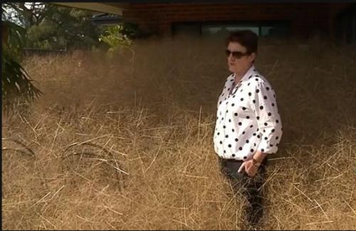 居民要花好几个小时才能清理完屋前的风滚草。