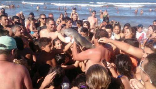 小海豚搁浅海豚,被游客抓着拍照。