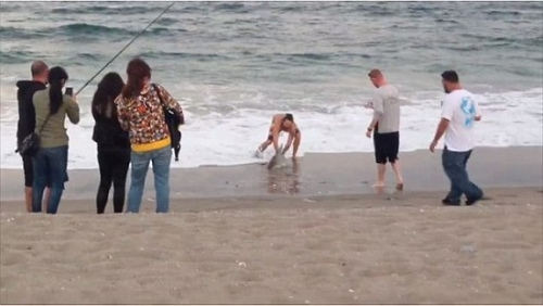 游人们围观男子抓鲨鱼。