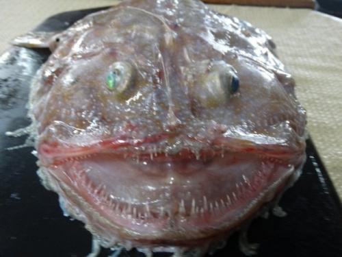 澳大利亚发现奇怪深海生物 眼睛凸出外形卡通(图)