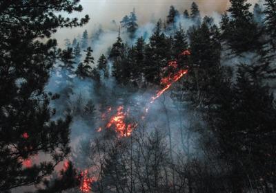 3月6日,甘肃迭部县达拉林场发作的丛林火警还未彻底点燃。