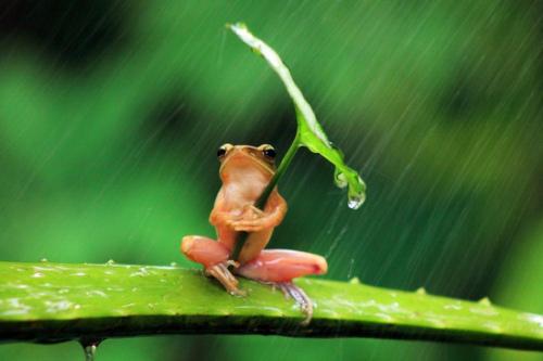 摄影师折腾青蛙摆拍。