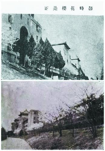 1947年,武巨匠生从四川迁回珞珈山后,榜首次看到樱花(材料图)。
