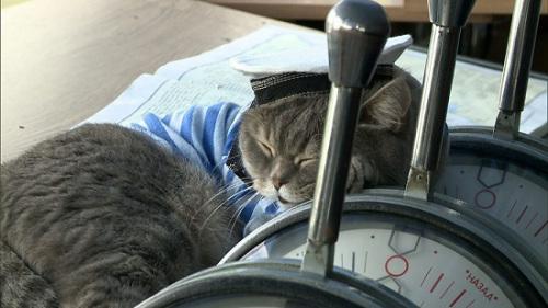 """""""水手""""的猫下属"""