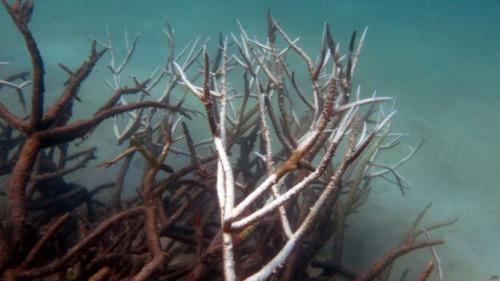 科学家警告说,大堡礁珊瑚恢复生机大概需要十年或更长时间。