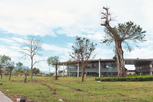 美术馆百树倒下。台湾《联合报》记者李蕙君/摄影