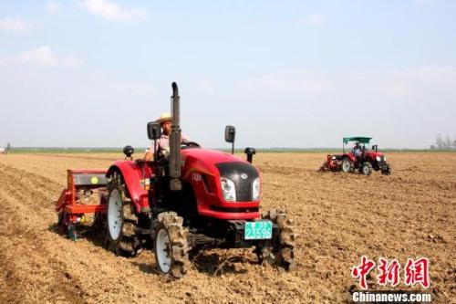 沙洋县马良镇受灾农田中,政府免费提供的农机正在为受灾农户抢种青贮玉米。 吴奇勇 摄