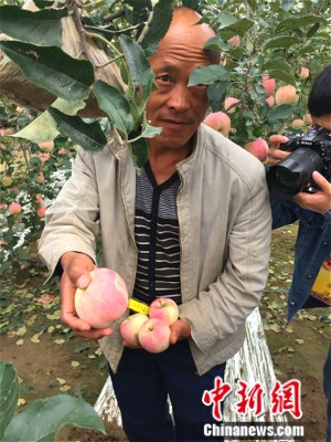 果农杨道道向记者展现印有祝愿笔墨的苹果。中新网 种卿 摄