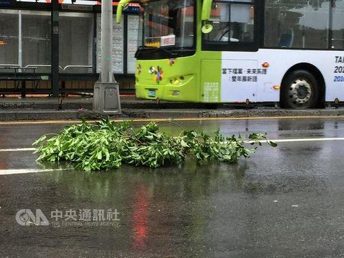 """台湾气候部分观察,9月27日凌晨5时,中度飓风""""鲇鱼""""狂风圈已打仗台湾东部陆地。图为台北陌头路树断枝吹到路上 。台湾""""中心社""""记者张铭坤摄"""