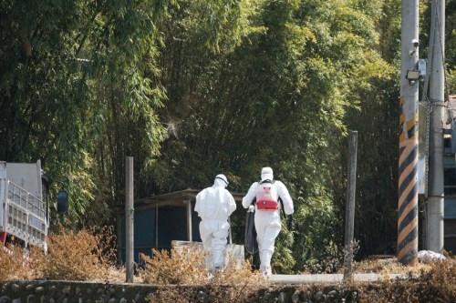 新竹县新埔镇一处养禽场出现禽只死亡,家畜防治所2月19日日前往采样消毒。台湾《联合报》记者陈妍霖/摄影