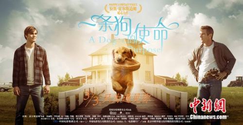 《一条狗的使命》海报