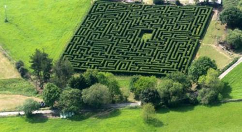 松林迷阵:农民用4000棵松树建西班牙最大迷宫(图)