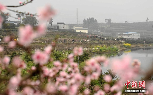 资料图:四川眉山阳春三月桃花朵朵开民众赏花忙。刘忠俊 摄