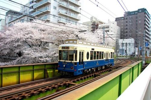 """东京都电推出""""都电樱花号""""列车。(图片来源:东京都交通局)"""