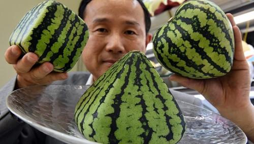 """27000美元买俩甜瓜 揭秘日本""""奢侈水果""""文化"""