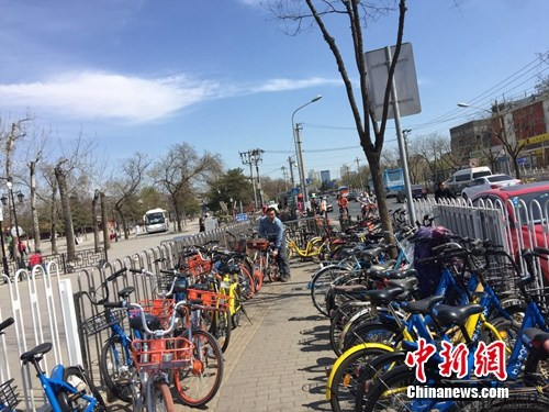 圆明园附近一段人行道被共享单车挤占了不少地方。中新网 吴涛 摄