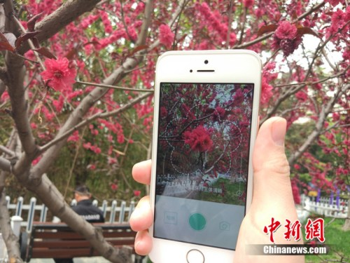 资料图:北京一名市民正在使用识花软件。 邱宇 摄