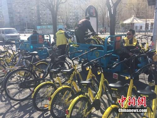某家共享单车企业运维人员正将故障车放进三轮车内,集中收回。 吴涛 摄