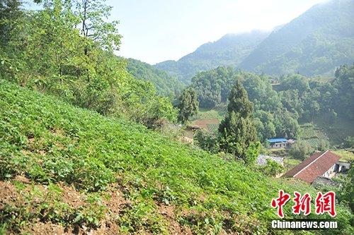 因地形所限,板厂村的耕地多在山坡上。记者 宋宇晟 摄
