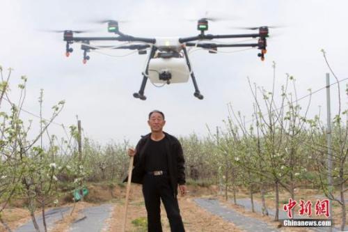 一架白色无人机在果园上空盘旋。张云 摄