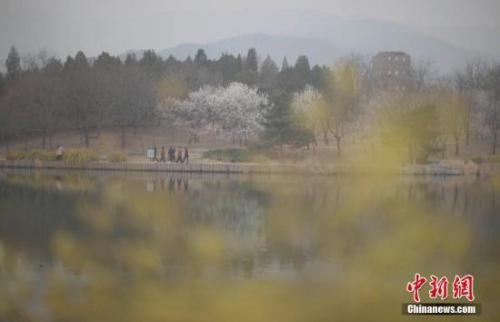 3月22日,北京遭遇雾霾天,空气质量达中度污染。图为市民在北京植物园赏春花。 <a target='_blank' href='http://www.chinanews.com/'>中新社</a>记者 刘关关 摄
